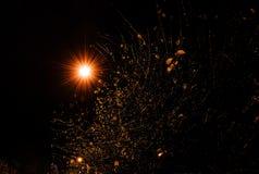 Adorno otoñal con las ramas de árbol mojadas, noche Fotografía de archivo