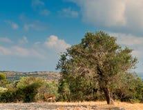 Adornos bíblicos con las colinas santas de Jerusalén Imágenes de archivo libres de regalías