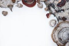 Adornos de capítulo del bosque en un fondo blanco Fotografía de archivo