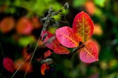adornos del otoño Imagen de archivo libre de regalías