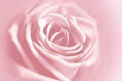 Adoucissez le fond rose Photos libres de droits