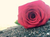 Adoucissez rose Images libres de droits