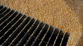 Ładownicza kukurudza w silos Zdjęcia Royalty Free