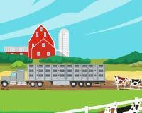 Ładownicze krowy Obrazy Stock