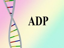 ADP - genetic concept. 3D illustration of ADP script with DNA double helix , isolated on colored pattern Royalty Free Stock Image