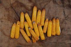 Adra dojrzała kukurudza, żniwo, warzywo, żółty jedzenie, zboże, żółty kolor, jesieni żniwo, adra, dojrzała kukurudza, rolnictwo,  Obraz Stock