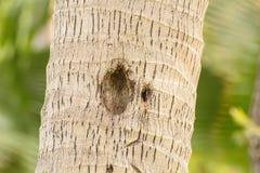 Adresse des Tieres in einem Baum Stockfotos