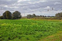 Adria, Rovigo, Vêneto, Itália: paisagem do campo no th imagem de stock royalty free