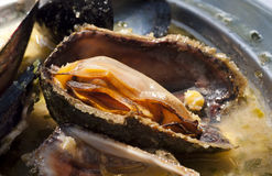 Adriatic mussels clouse -up Stock Photos