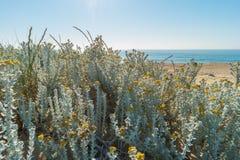 adriatic plaży morza Włochy widok Rośliny r na diunie Morze i niebieskie niebo Zdjęcie Royalty Free