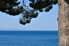 Adriatic sea behind tree in Podgora, Croatia Royalty Free Stock Images