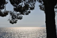 Adriatic sea behind tree in Podgora, Croatia Stock Images