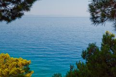 Adriatic sea framed by tree stock photo