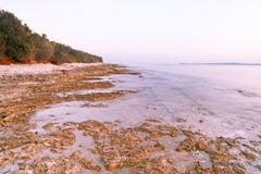 Adriatic sea shore. Losinj island, Croatia. Wild beach Stock Photos