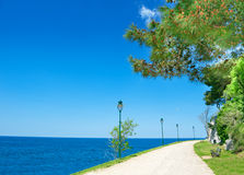 Adriatic sea shore of Rovinj, Croatia. Adriatic sea shore of Rovinj, popular touristic destination at Croatian coast. Sidewalk with pine trees Royalty Free Stock Photo