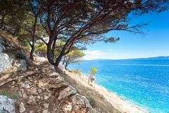 Adriatic Sea and stone cliff mountains with pines in Dalmatia. Spectacular view of landscaped Adriatic Sea and stone cliff mountains with pine forest in Dalmatia stock photography