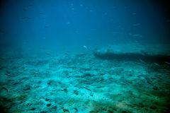 Adriatic sea underwater Stock Image