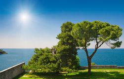 Adriatic sea view with pines at Rovinj, Croatia. Adriatic sea view at Rovinj, popular touristic destination of Croatian coast. Pine trees in coastal garden Royalty Free Stock Images