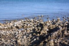 Adriatic Sea wild coast. stock images