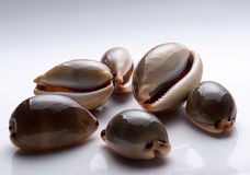 Adriatic snails Royalty Free Stock Photography