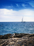 Adriatic staff. Sailboat and gull on the high seas,usual scene on the Adriatic sea Stock Images