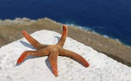 Adriatic starfish. On the rock. Sea is in the background royalty free stock images