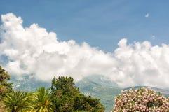 Adriatische Landschaft - Bäume, Himmel und Berg Stockbild