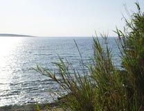 Adriatische Seeküste in Kroatien Große Blätter und Niederlassungen des Reedmittelmeeranlagenphragmites nahe den Oberfläche und bl Lizenzfreie Stockfotos