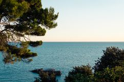 Adriatische Seeküste mit Kiefer Lizenzfreies Stockfoto