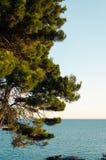 Adriatische Seeküste mit Kiefer Stockfotografie
