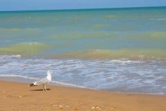 Adriatische Seeküstenansicht Küste von Italien, von sandigem Strand des Sommers und von Seemöwe Stockfoto