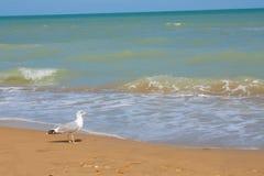 Adriatische Seeküstenansicht Küste von Italien, von sandigem Strand des Sommers und von Seemöwe Lizenzfreie Stockbilder