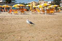 Adriatische Seeküstenansicht Küste von Italien, Sommerregenschirme auf sandigem Strand und Seemöwe Lizenzfreies Stockfoto