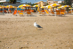 Adriatische Seeküstenansicht Küste von Italien, Sommerregenschirme auf sandigem Strand und Seemöwe Lizenzfreies Stockbild