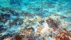 Adriatischer Meeresgrund Lizenzfreies Stockbild