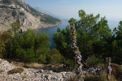 Adriatisches Costline Brela Lizenzfreie Stockfotografie