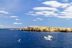 Adriatisches Meer, Berge und Himmel Seemöwen über Wasser Stockfoto
