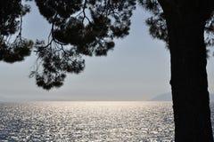 Adriatisches Meer hinter Baum in Podgora, Kroatien Stockbilder