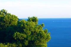 Adriatisches See- und Kiefernkrone Stockfoto