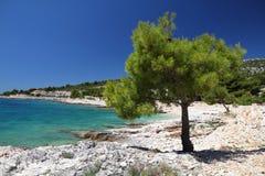 Adriatisches Seestrand Stockbilder