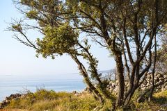 Adriatycki seashore, Krk, Chorwacja zdjęcie royalty free