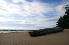 Adrift log. Log on a beach brought by the sea waves Stock Photography