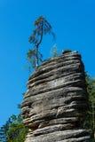 Adrspach-Felsen mit Baum Stockbild