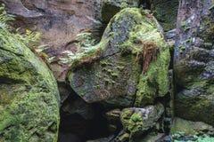 Adrspach teplice岩石 免版税库存图片