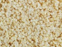 adry gotujący quinoa Obrazy Royalty Free