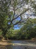 Aduana-Flusswald Lizenzfreies Stockfoto