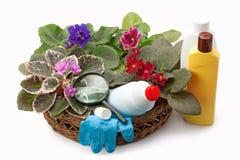 Adubos químicos do saintpaulia da violeta africana, inseticidas e Foto de Stock Royalty Free