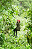 Adult Afro Lady On Zip Line Distance Shot. Adult Slim Afro Woman On Zip Line In Ecuadorian Rainforest Nearby Banos De Agua Santa royalty free stock images