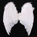 Adult Angel Wings Photography Prop. On Black Background Costume royalty free stock photo