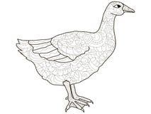 Free Adult Antistress Coloring Bird, Duck, Goose Pattern, Astrakhan. Illustration Of Black Lines Doodle, White Background Stock Image - 114713571